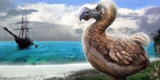 De ce a dispărut pasărea dodo? Unde a trăit aceasta?